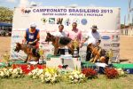 Campeonato Brasileiro - Pastor Alemão - Fotos por Igor Pereira (1089)